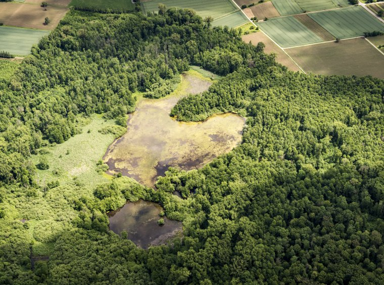 agricultural land, forest