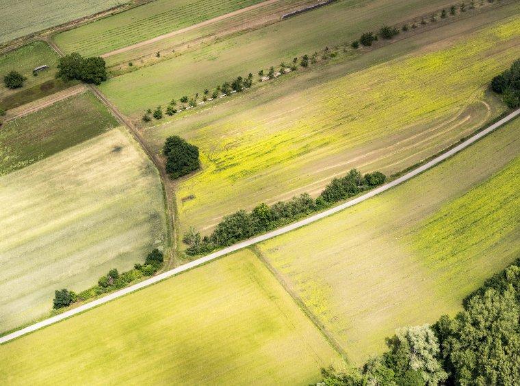Landwirtschaftlich genutzte Fläche